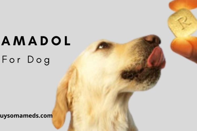 Tramadol for dog
